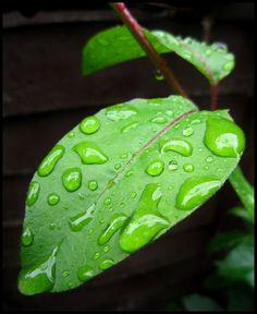 Rain Drops Falling of the Leaf Water Drops, Rain Drops, Bubbles Wallpaper, Water Drawing, Calming Colors, Dew Drops, World Of Color, Leaf Art, Macro Photography