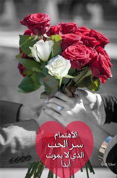 Good Morning, Rose, Flowers, Plants, Buen Dia, Pink, Bonjour, Plant, Roses