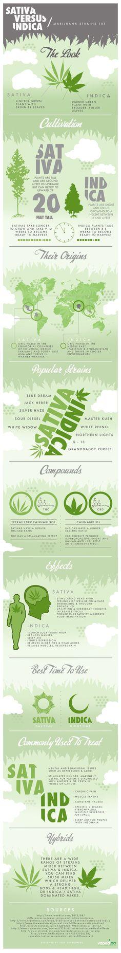Cannabis Indica vs Sativa Info-graphic