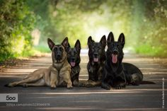 Man's best friends by fredericzimmer. Please Like http://fb.me/go4photos and Follow @go4fotos Thank You. :-)