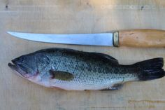 How to Fillet a Fish: Bass Edition After the thrill of the catch is gone, the whole fish remains.