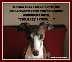 Crazy Dog People! / antonio the italian greyhound