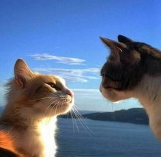 You look away first Naw YOU look away first ! - LOLcats is the best place to find and submit funny cat memes and other silly cat materials to share with the world. We find the funny cats that… Animals And Pets, Baby Animals, Funny Animals, Cute Animals, Animals Images, I Love Cats, Cool Cats, Crazy Cats, Pretty Cats