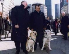 Roselle and Salty led their blind humans down 70 floors in the World Trade Center before the towers fell on September 11th.