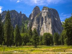 The blue skies, green trees, and gray granite of a midsummer meadow in Yosemite Valley, looking southwest towards Cathedral Rocks.