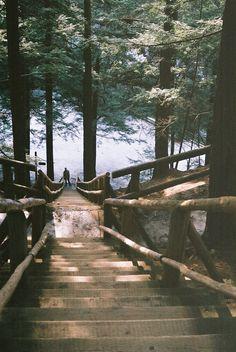 winter travel, forest, nature, wild, wilderness, mountains, pines, trees, winter walk, nature travel, travel inspiration, tumblr, wintergirl, pumpernickel pixie