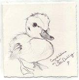 cute duckling drawings - Bing images