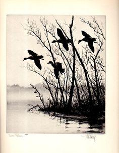 "1930s ""TIMBER MALLARDS"" No.17  Richard Bishop Duck Wildlife Art Vintage Print , Birds Duck Hunting Wildlife Art Natural History"