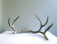 antlers.