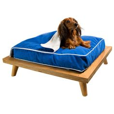 Items similar to Raised Timber Futon Bed Frame - NZ Designed and Made! Dog Cages, Mini Dachshund, Pacific Blue, Pet Beds, Raised Beds, Your Pet, Cushions, Couch, Dog Cat