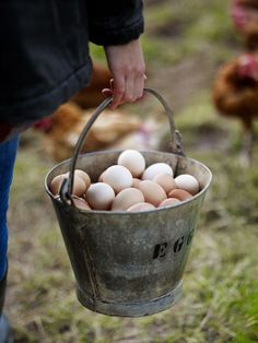 Lots and lots of eggs this morning, and somewhere around here are the new chicks. I hope they get back to the henhouse soon.  Rooney Robison Antiques