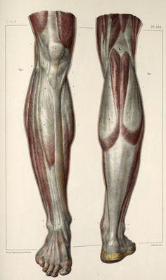 Anatomi Bacaklar 6 / Anatomy Legs 6 - | ( inspirationalartworks.blogspot ) | - #Anatomi #anatomy #bacak #leg #drawing #design #sketch #sketching #character #digital #digitalpainting