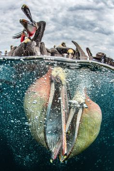 Underwater photographer of the year 2017 winners – in pictures