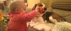 Este cão beagle nunca foi ensinado a amar esta bebé, mas cuida dela de uma forma muito docee carinhosa.Este video é a coisa mais fofa que vais ver hoje!:)
