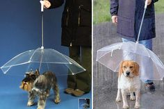 Protect yourself from the elements with a dogbrella.   15 Invaluable Lifehacks Every Dog Should Know
