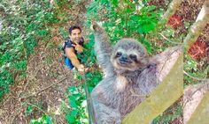 'Best selfie ever!': Todos queremos una foto con un perezoso