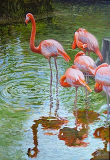 Flamingos in the River