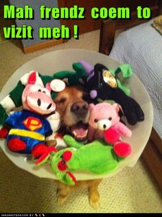 The ONLY way to wear the cone of shame. (AAAHHH, the grammar is killing me, but too cute)