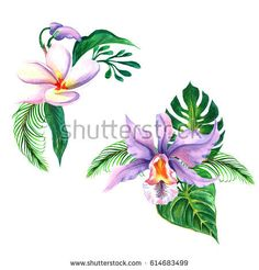 Tropical hawaii leaves palm tree in a watercolor style isolated aquarelle wild flower.