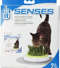 Catit Design Senses Grass Garden Refill Kit - *** You can find more details by visiting the image link. (This is an affiliate link and I receive a commission for the sales) Nursing Supplies, Pet Supplies, Best Interactive Cat Toys, Cat Grass, Cat Scratching Post, Kit, Image Link, Design, Amazon