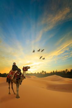 There is no doubt whatsoever that some of the best places for taking a camel trek in Morocco are sand dunes of the Erg Chebbi, a location such as Mhamid Desert Dream, Desert Life, Beautiful World, Beautiful Places, Camelus, Deserts Of The World, Photos Voyages, North Africa, Cool Photos