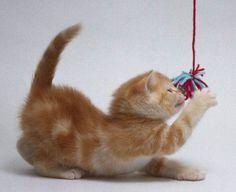 Brinquedos para gatos faça-voce-mesmo.