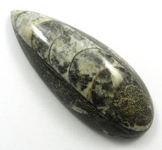 140.45CT Beautiful NATURAL ORTHOCERAS FOSSIL 66x26mm Pear Semi Precious Gemstone #magicalcollection #Orthoceras #gemstone #jewelry