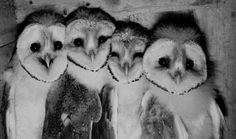 The owls are not what they seem.