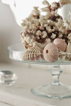 Shells and coral in/on a glass cake display - Laura Ashley...