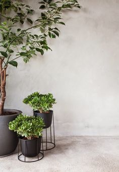 Wire pots by Norm Architects   Menu SS 2015