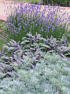 Lavendel und Salbei