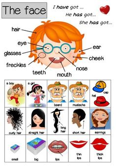 anglais le portrait the face english cycle 3 fiches flashcards vocabulaire vocabulary English Time, English Course, English Fun, English Words, English Grammar, Teaching English, Learn English, English Language, Teach English To Kids