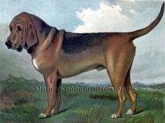 Bloodhound ~ Victorian Dogs ~ Counted Cross Stitch Pattern #StoneyKnobFarmHeirlooms #CountedCrossStitch