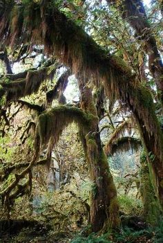 Hoh Rainforest, Olympic National Park, Washington State- this is one of the most beautiful places in Washington! by desiree