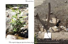 Philosophie Pür cachet; Un mode de vie, A way of living purcachet.com Coming Soon, My Love, Plants, Philosophy, Plant, Planets
