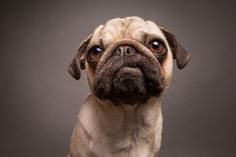 Dog photographer Elke Vogelsang is a renown expert for dog photography in Germany and worldwide and offers a unique style of studio photography for dogs. Commercial and editorial bookings.