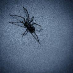 #spidersfrommars #instagram #mobile #photo