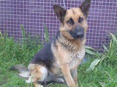 www.PetHarbor.com pet:LACT4.A1556326
