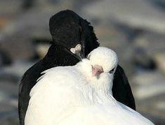 ты моя голубка любимая