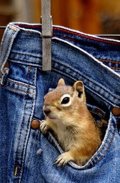 """I could make a nice 'drey' (home) with these jeans on the washing line..."" (N.B: A Squirrel's home is called: 'A Drey.')"