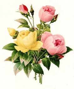 Mais figuras de rosas  delicadas para imprimir e fazer belas decoupage e vários outros tipos de artes.
