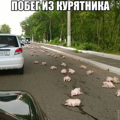 #побег из курятника