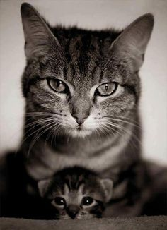 Love Cute Animals shares pics of playful animals, cute baby animals, dogs that stay cute, cute cats and kittens and funny animal images. Animals And Pets, Baby Animals, Funny Animals, Cute Animals, Animals With Their Babies, Wild Animals, Cute Kittens, Cats And Kittens, Crazy Cat Lady
