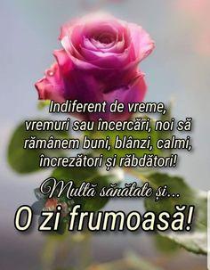 Good Morning Greetings, Sf, Facebook