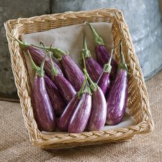 F1 Eggplant Seeds Aretussa