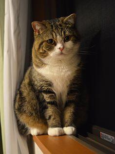 """°cat° """"MARU"""" まるです #cat"""