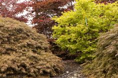 form and foliage | Year round garden interest with minimal care