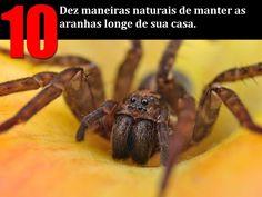 Conheça 10 maneiras naturais e fáceis de livrar-se das aranhas!