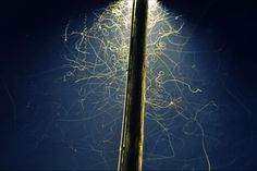 Long exposure of summer insects under a street lamp