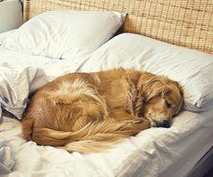 precious, love when dogs sleep